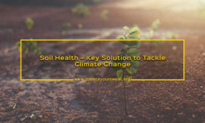 Conservation Of Soil