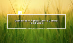 sustainable agriculture techniques