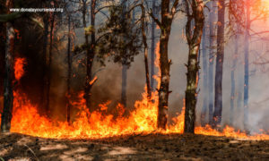 Forest fires causes